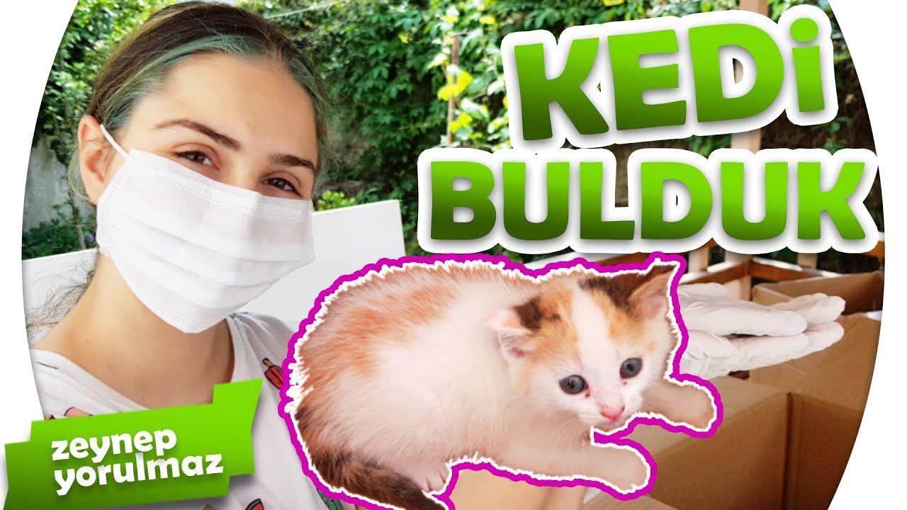 VLOG Annesiz Bir Kedi Bulduk!! Zeynep Yorulmaz