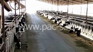 Система туманообразования для охлаждения животных (коровы, свиньи, и т.д.)(Система тумана предназначена для повышения эффективности Вашего производства (фермы, коровники, свинарник..., 2014-12-23T10:18:38.000Z)