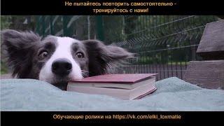 Ёлки Лохматые - Самая умная собака в России