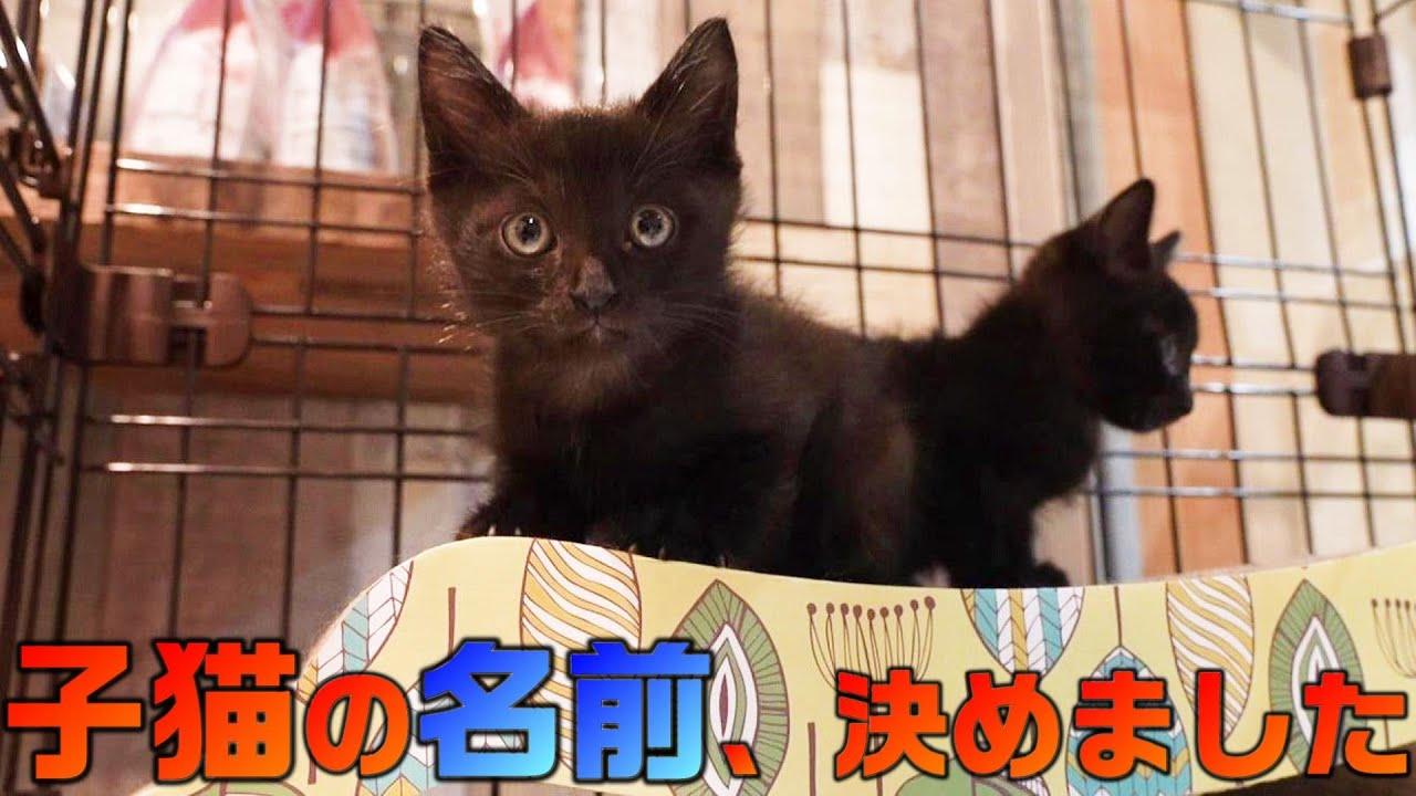保護された黒猫子猫兄妹の名前(仮)を決めました!