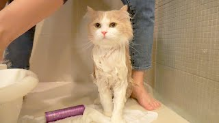 I Went Overboard with My Cat's Diet...(ENG SUB)