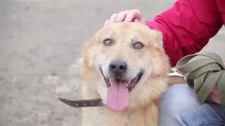 Хочу домой. Бездомные животные ищут хозяина. История пса Вани