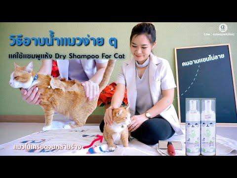 วิธีอาบน้ำแมวง่ายๆ ด้วยแชมพูแห้ง Easy Cat Bathing with Organic Dry Shampoo