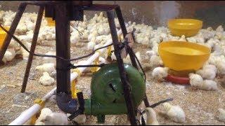 Pemanas Ayam Broiler menggunakan Kompor Oli Bekas trial#3