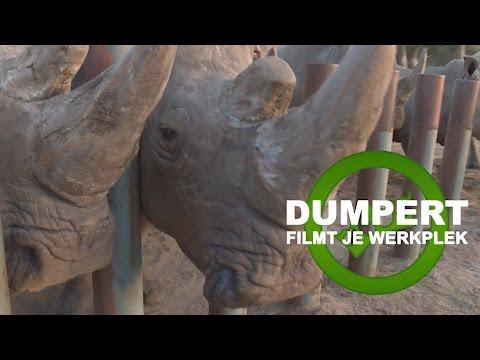 Dumpert Filmt Je Werkplek S02E01: Neushoornverzorger
