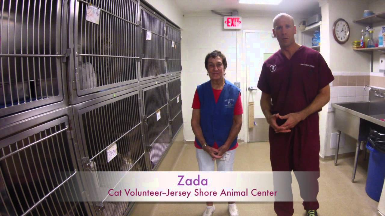 An Inside Look at an Animal Shelter with Dr  Christman - Brick Town