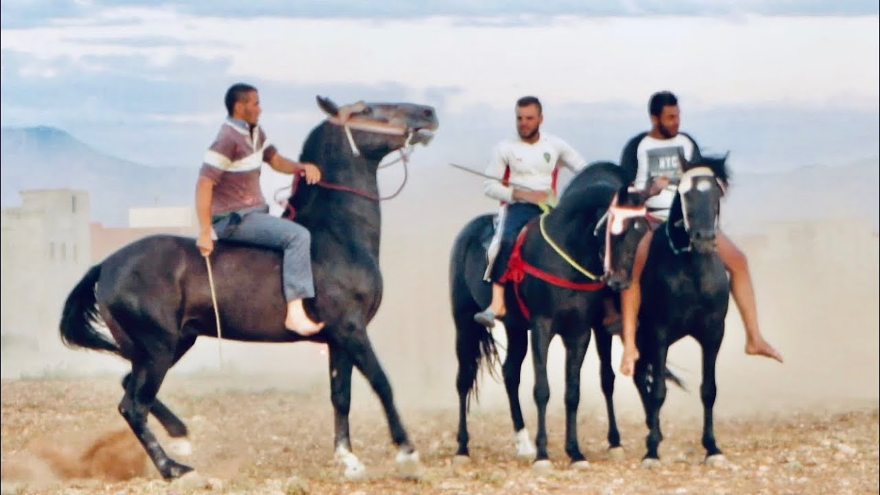 ركوب الخيل بدون سرج و التدريب على السرعة | خيول التبوريدة المغربية 2020