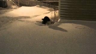 Illinois Blizzard Of 2-1-15