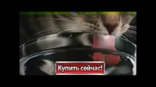 Whiskas   самый полезный корм для кошек