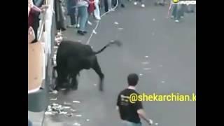 Un tauro tres dangereux 😨😨😨😨