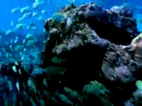 Oprah Shines Light On Great Pacific Garbage Patch (VIDEO).flv
