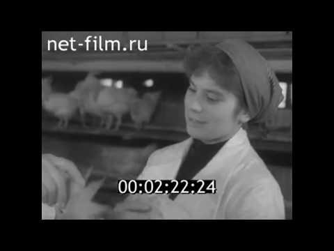 1961г. г.Котельнич. птицефабрика. Кировская обл