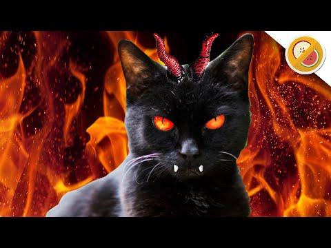 THE DEVIL CAT - Story Time w/ Mr. Fruit