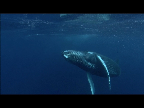 Global Shipping Lanes and Whale Conservation | WCS