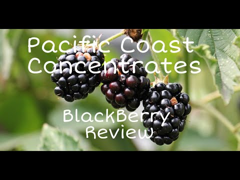 Pacific Coast Concentrates BlackBerry Review