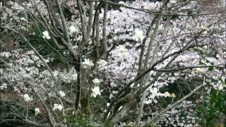 120407_新江戸川公園・永青文庫・関口芭蕉庵~春