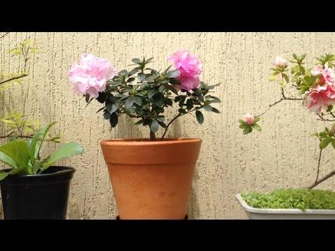 Como Plantar Flores em Vasos - YouTube