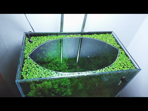 12 Months Update - (Surprise Baby Gourami) NO Filter, NO CO2, NO Ferts 5 Gallon Nano Tank