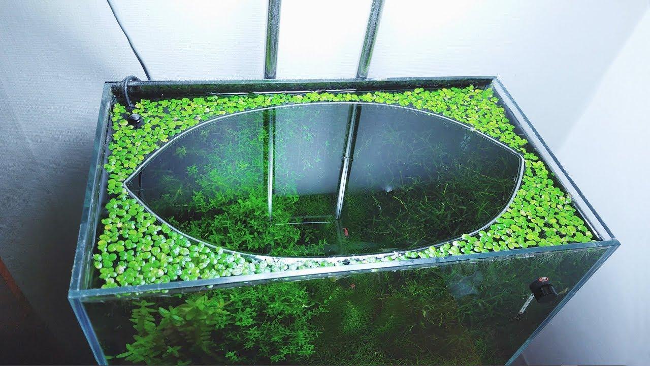 12-months-update-surprise-baby-gourami-no-filter-no-co2-no-ferts-5-gallon-nano-tank