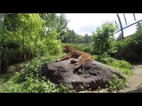 Blijdorp Rotterdam Zoo
