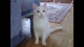 Коты бывают фотогеничны 4 вариант