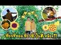 Grace zy    เที่ยว 1 วัน สถานที่สีเหลืองทุกอย่างสีเหลือง?!! งานนี้มีเเกล้ง?!