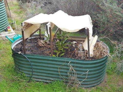 Planting Waratah Cuttings.