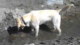 Hund versucht Fische zu fangen