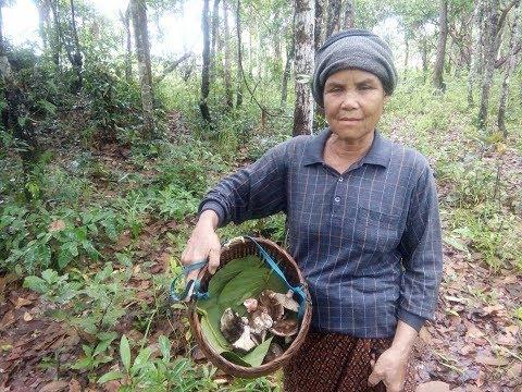 Finding food Wild mushrooms to make food , Laos 2017