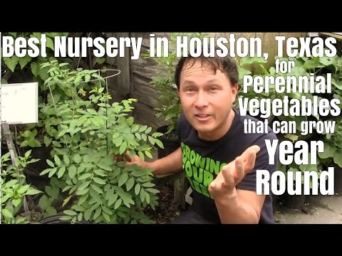 Best Nursery in Houston for Perennial Vegetables that can Grow Year Round