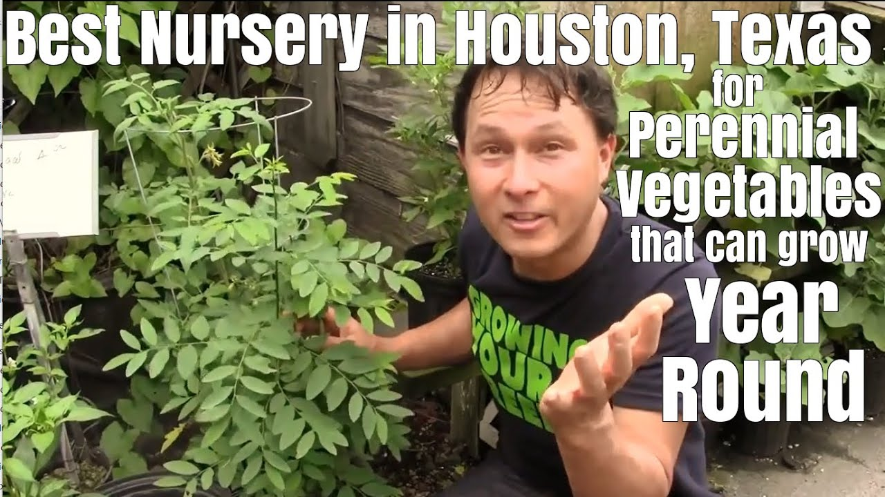 Perennial Vegetables That Can Grow