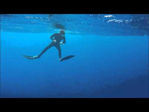 Galapagos Sharks 3 Miles Off Hale`iwa, Oahu