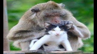 смешное животное - собака и кошка и обезьяна - когда обезьяна любит кошек