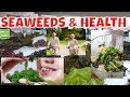 Health From the Sea Things You Need To Know About Health Benefits Of Seaweeds.