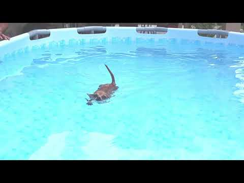 Mindy The Swimming Dog