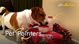 What NOT to Feed Your Pet This Holiday