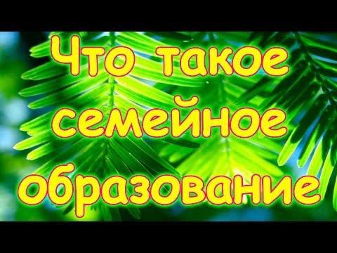 """Семья Бровченко. Что такое """"Семейное образование""""."""