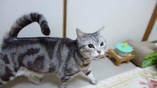 猫の嬉しいときのお返事 4 thumbnail