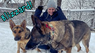 FORCED MY WIFE TO SHOVEL THE DRIVEWAY! German Shepherds get hit with Blizzard Snow!