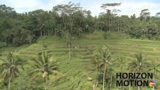 印尼 峇里島 梯田 稻田 棕櫚樹 Rice terrace in Bali, Indonesia hm2630000172