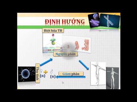 Bai 18 Chu ki te bao va qua trinh nguyen phan_ GV Phan Thanh Huy_ Phân 1.m4v