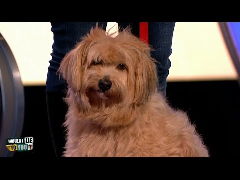 """""""This is my.."""" Feat. Mary the dog, Alex Jones, L. Mack, John Clarke - Would I Lie to You? [HD][CC]"""