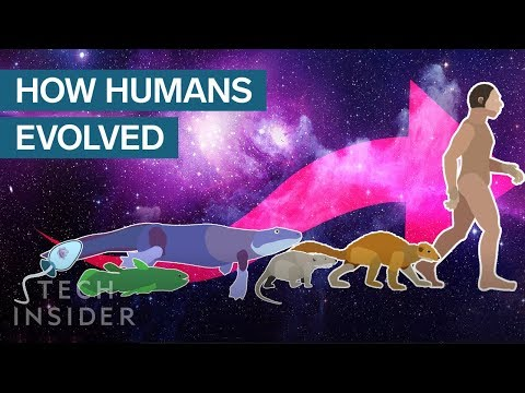 "Thumbnail for the embedded element ""Incredible Animation Shows How Humans Evolved From Early Life"""