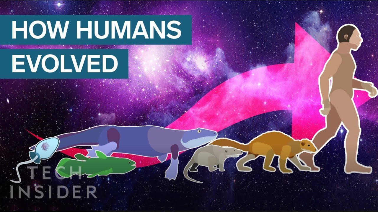 Download Incredible Animation Shows How Humans Evolved From Early Life