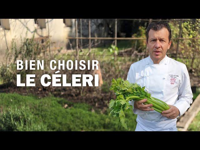 BIEN CHOISIR un CÉLERI by Nicolas Masse
