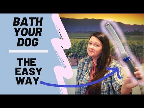 Bathing your Dog - Waterpik Review