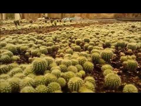bagnare piante grasse - 28 images - consigli per le piante grasse in ...