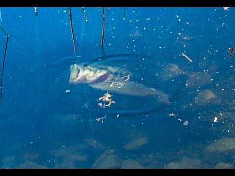 Fishing lafayette reservoir bed fishing youtube for Lafayette reservoir fishing report