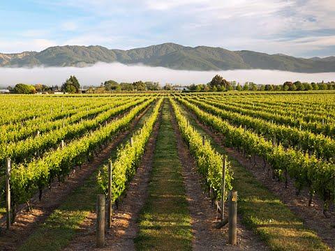 Stoneleigh 2009 Sauvignon Blanc, Marlborough, NZ from YouTube · Duration:  4 minutes 3 seconds