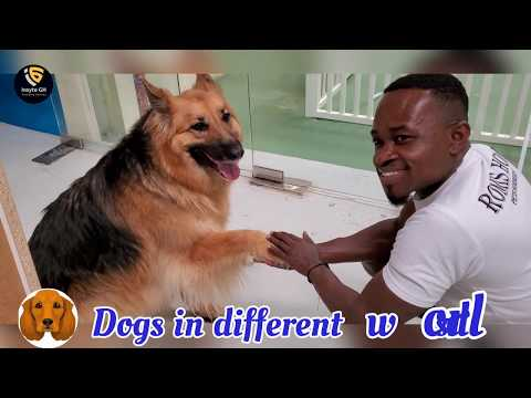 dogs-in-dubai---dogs-in-different-world---adorable-creatures-treated-with-care-and-love
